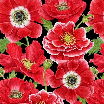 HG Poppy Perfection Larg Packed Poppy on Black 1194-88